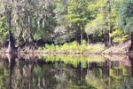 Thumbnail Suwannee River