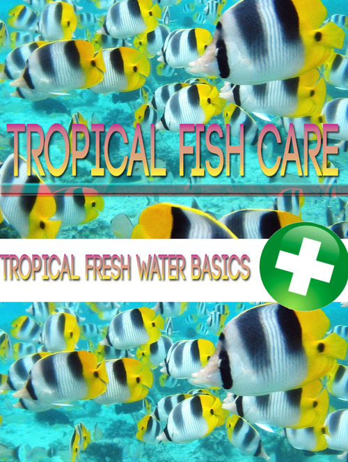 Tropical Fish Care - Download Audio Books / Teaching