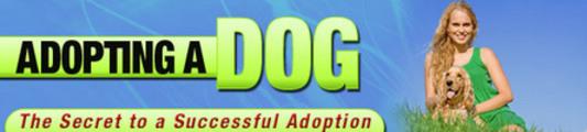 Thumbnail Dog Adopting-Secret To A Successful Adoption