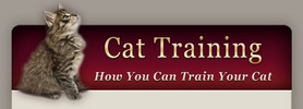 Thumbnail Training Your Cat-The Simple Ways
