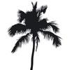 Thumbnail Palme als Silhouette