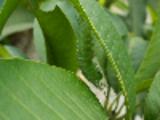 Thumbnail Camouflage - Baron Caterpillar