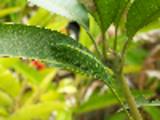Thumbnail Baron Caterpillar - Animal Camouflage