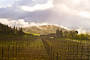 Thumbnail Fruehling in der Toscana