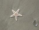 Thumbnail Dead Star Fish