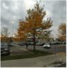 Thumbnail Mcmaster University Hamilton Ontario