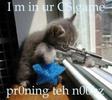 Thumbnail Sniper Kitteh
