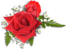 Thumbnail Red Roses Image