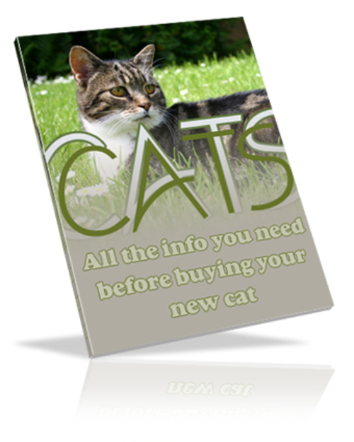 Pay for Your Guide On Cats