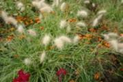 Thumbnail Herbstliche Blumen im Britzer Garten 2