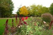 Thumbnail Herbstliche Blumen im Britzer Garten 3