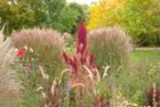 Thumbnail Herbstliche Blumen im Britzer Garten 4