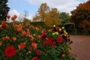 Thumbnail Herbstliche Blumen im Britzer Garten