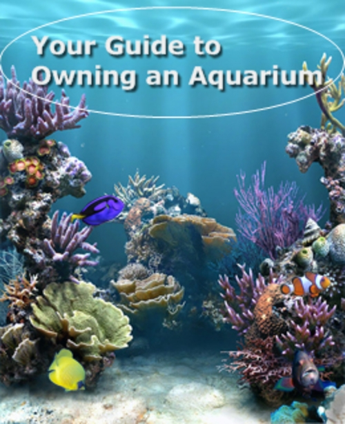 Pay for Your Guide to Owning an Aquarium