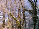 Thumbnail Winterlicher Spaziergang