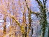 Thumbnail Postermotiv HDR - PM004 - Wintertraum
