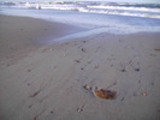 Thumbnail AKY 06 Augenblicke am Meer