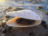 Thumbnail AKX 11 Muschel Momente
