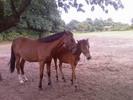 Thumbnail Pferde