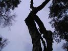 Thumbnail Alter Baum