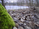 Thumbnail Frühlingserwachen 01.März 2009