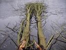 Thumbnail Spring-awakes 2009-03-01