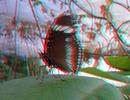 Thumbnail 3D - Schmetterling