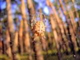 Thumbnail Postermotiv HDR - PM005 - Spinne / Spider