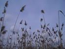 Thumbnail AKZ 02 Strandgrass