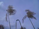 Thumbnail AKZ 03 Strandgrass
