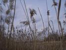 Thumbnail AKZ 04 Strandgrass