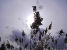 Thumbnail AKZ 05 Strandgrass