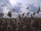 Thumbnail AKZ 06 Strandgrass