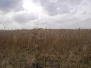 Thumbnail AKZ 07 Strandgrass
