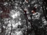 Thumbnail PhotoArt - Im Wald
