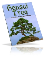Thumbnail Bonsai Tree - With Private Label Rights