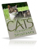 Thumbnail Cats : How To Choose & Care For A Cat - With Giveaway Rights