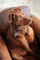 Thumbnail Perfect Handbook for Imperfect Dog Owners With Master Resell Rights