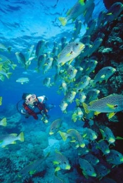 Pay for The Scuba Diving Chick With Personal Use Only