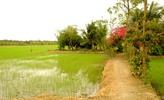 Thumbnail Vietnamese rice paddy