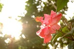 Thumbnail sunbathing flowers