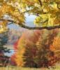 Thumbnail New England Foliage 2013