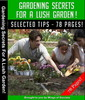 Thumbnail Gardening Secrets For A Lush Garden