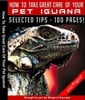 Thumbnail How To Take Great Care Of Your Pet Iguana