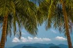 Thumbnail Koh Wai Palm Trees
