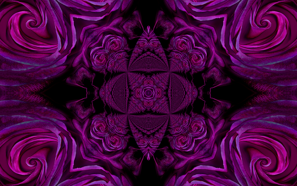 Pay for abstract purple rose background