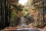 Thumbnail Falling Leaves on Road, AVI, Full Screen, NTSC, 720X480, RF