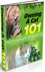 Thumbnail Owning A Cat 101  Tips To Buying & Owning A Cat