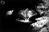 Thumbnail Arbor Eclipse