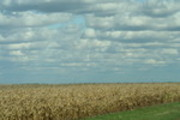 Thumbnail corn fields and clouds